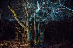 La forêt de Hoia-Baciu Photographie stock