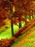 La forêt de l'automne Images libres de droits