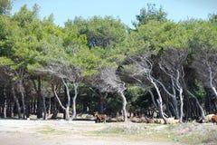 La forêt de la soude Photo libre de droits