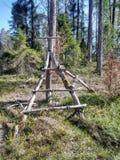 La forêt de matin est bonne photo libre de droits