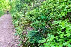 La forêt du Palatinat au printemps l'allemagne Images stock