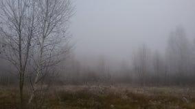 La forêt en automne Premier gel sur les arbres et l'herbe Image libre de droits