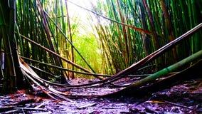 La forêt en bambou images stock