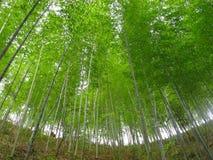 La forêt en bambou Photo libre de droits