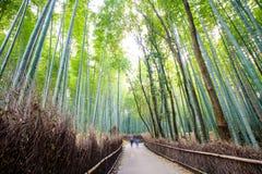 La forêt en bambou de Kyoto, Japon Photos stock