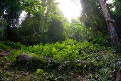 La forêt en parc de Khao Luang Naional de la Thaïlande Image libre de droits