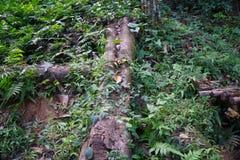 La forêt en parc de Khao Luang Naional de la Thaïlande Photo libre de droits