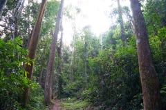 La forêt en parc de Khao Luang Naional de la Thaïlande Images libres de droits