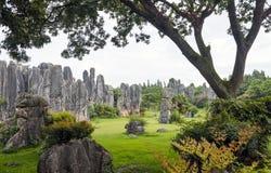 La forêt en pierre Photo libre de droits