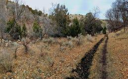 La forêt en retard de panorama d'automne regarde la hausse, faisant du vélo, traîne à cheval par des arbres sur la fourchette et  photo stock