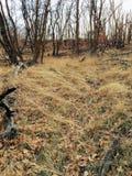 La forêt en retard de panorama d'automne regarde la hausse, faisant du vélo, traîne à cheval par des arbres sur la fourchette et  image stock