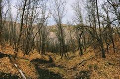 La forêt en retard de panorama d'automne regarde la hausse, faisant du vélo, traîne à cheval par des arbres sur la fourchette et  image libre de droits