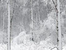 La forêt, est couverte de neige photo libre de droits