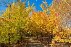 La forêt et le chemin polychromes d'automne Photo stock