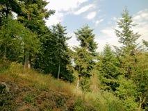 La forêt et le séjour dans lui est un ami de santé des personnes Photo libre de droits