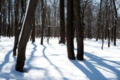 La forêt et la neige d'hiver ont couvert les troncs et le plancher Photo stock