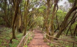 La forêt humide étonnante en La Gomera Images libres de droits