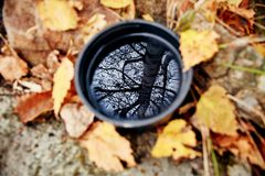 La forêt jaune d'or d'automne s'est reflétée dans une tasse de thé Tasse de ho Photographie stock