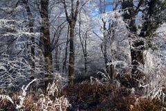La forêt magique image libre de droits