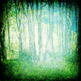 La forêt magique Photos libres de droits