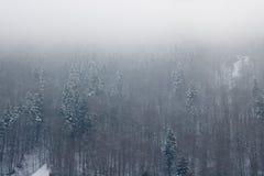 La forêt neigeuse de montagnes carpathiennes Photo libre de droits