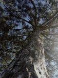 La forêt observe des écureuils Photo libre de droits