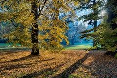La forêt pendant le matin Photo stock