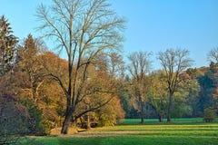 La forêt pendant le matin Images libres de droits