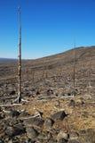 La forêt perdue Images libres de droits