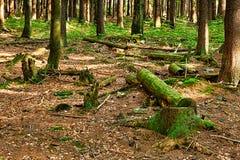 La forêt primitive Image stock