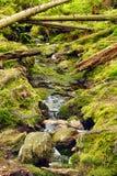 La forêt primitive avec The Creek - HDR Photo libre de droits