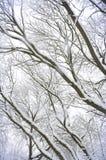 La forêt s'est recroquevillée avec la neige. photos stock