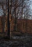 La forêt s'est tôt le matin allumée par le soleil photos stock