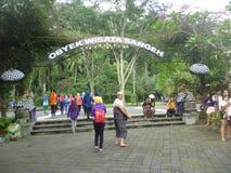 La forêt sainte de singe de Sangeh Images libres de droits