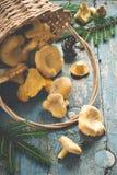 La forêt sauvage répand des chanterelles dispersées du panier sur le vieux fond Photographie stock libre de droits