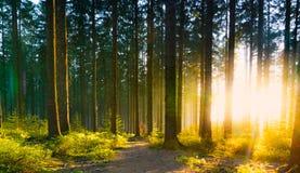 La forêt silencieuse au printemps avec le beau soleil lumineux rayonne Photos stock