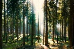 La forêt silencieuse au printemps avec le beau soleil lumineux rayonne Images stock