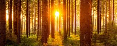 La forêt silencieuse au printemps avec le beau soleil lumineux rayonne Photos libres de droits