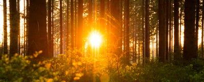 La forêt silencieuse au printemps avec le beau soleil lumineux rayonne Photo stock