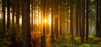 La forêt silencieuse au printemps avec le beau soleil lumineux rayonne Image libre de droits
