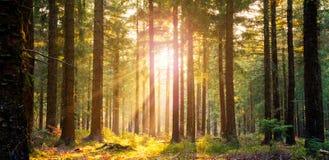 La forêt silencieuse au printemps avec le beau soleil lumineux rayonne Images libres de droits