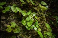 La forêt soit fraîche images stock
