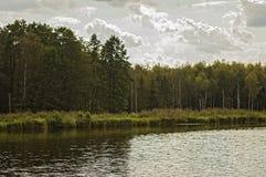 La forêt sur le rivage du lac Photographie stock