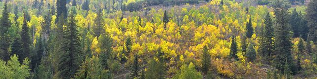 La forêt tôt de panorama d'automne de fin d'été regarde la hausse, faisant du vélo, à cheval des traînées par des arbres le long  photos stock