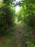 La forêt tranquille Image libre de droits