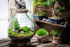 La forêt tropicale étonnante dans un pot, sauvent l'idée de la terre Photo stock