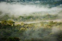 La forêt tropicale de matin dans la jungle d'Amazonic, Equateur Photos libres de droits