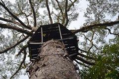 La forêt tropicale de plaine du Bornéo est un ecoregion, dans le biome feuillu moite tropical et subtropical de forêts, de la gra image stock