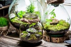 La forêt tropicale merveilleuse dans un pot, sauvent l'idée de la terre Image stock