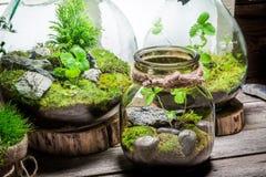 La forêt tropicale renversante dans un pot, sauvent l'idée de la terre Photo stock